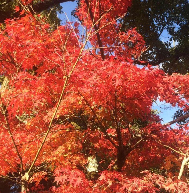 紅葉が綺麗~♪