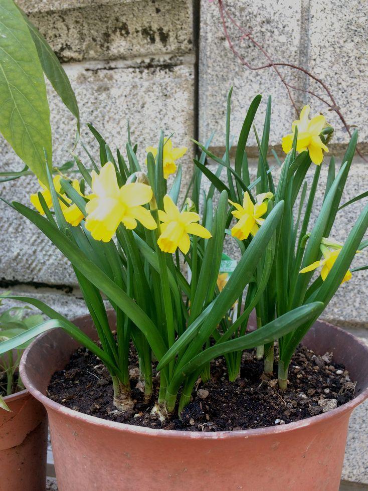 春が来ぃーたー♪