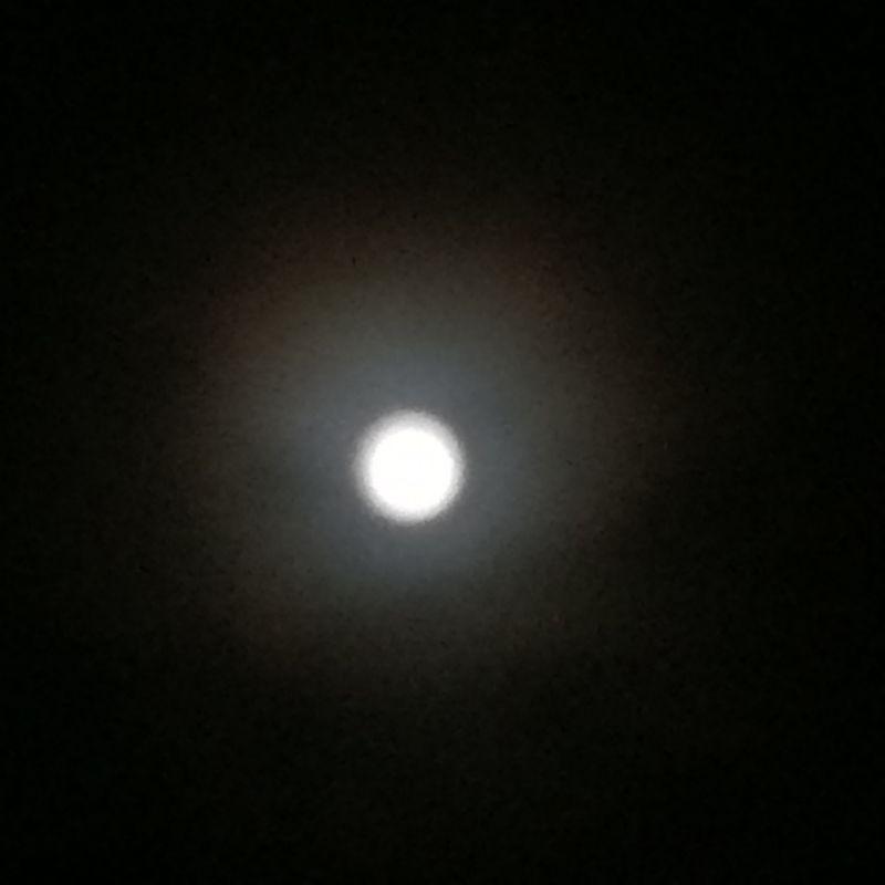 中秋の名月です♪