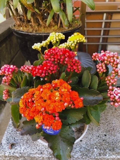 お花でニッコリ♪